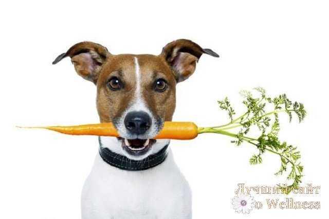 Морковная диета - дешевый и эфективный способ похудения.