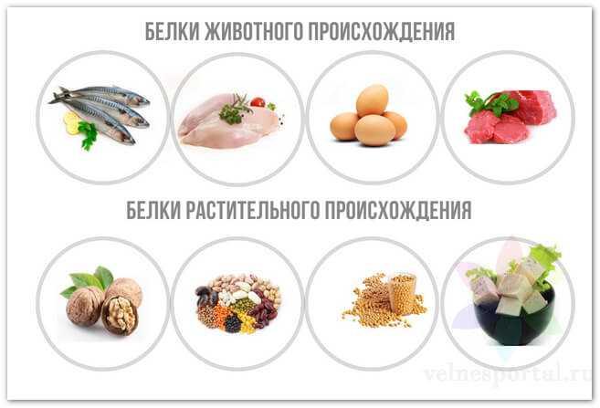 Источники белков животного и растительного происхождения, фото